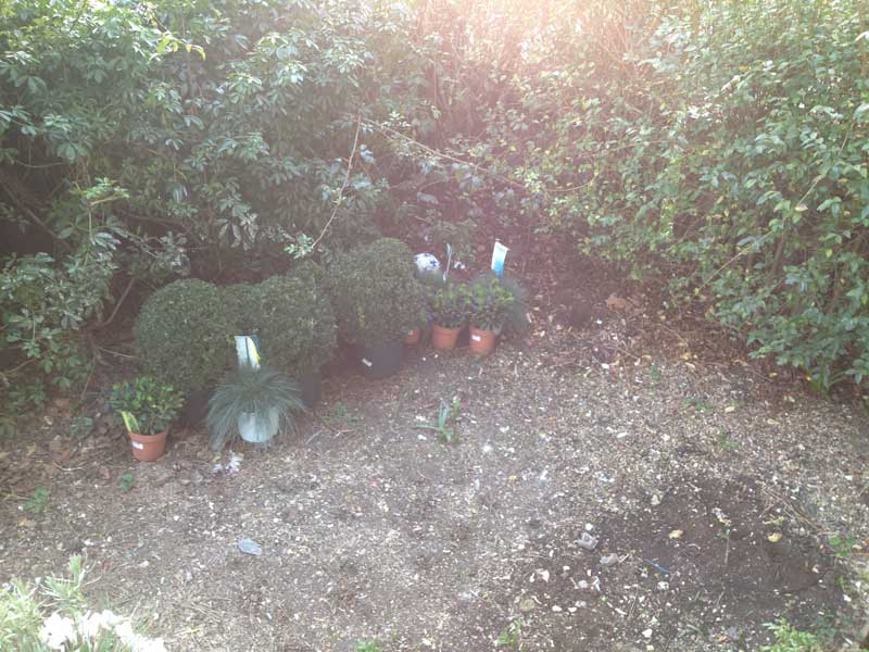 the cleared garden